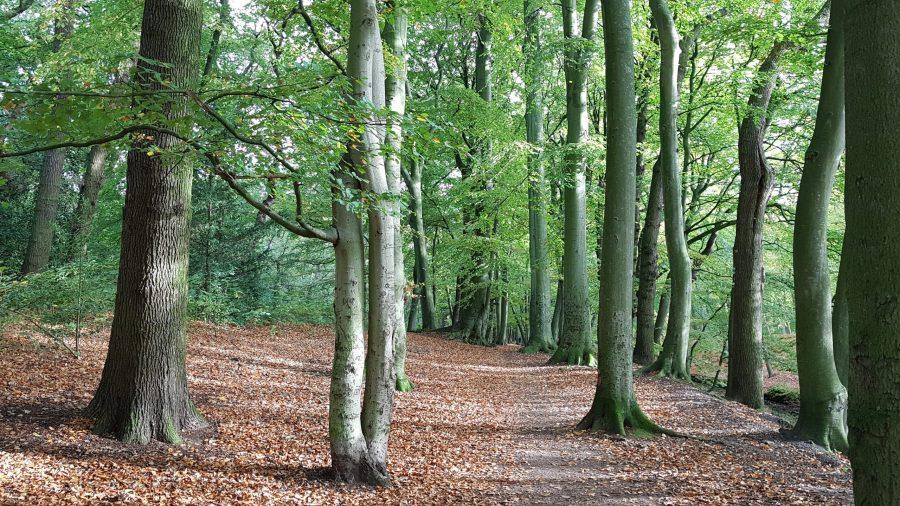 Clingendael bomen