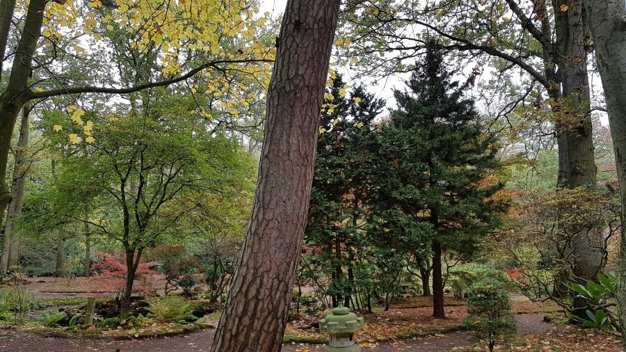 Clingendael glimp Japanse Tuin
