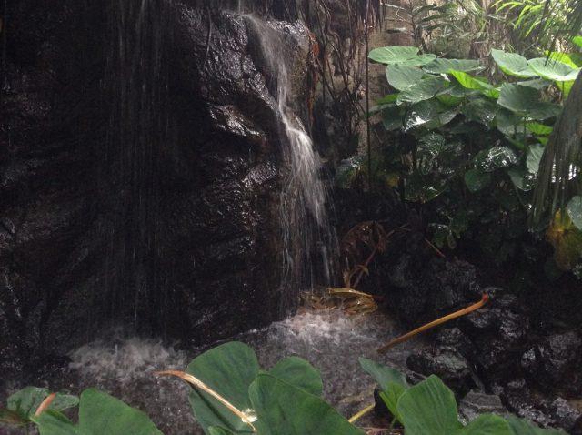 In de jungle van Avifauna