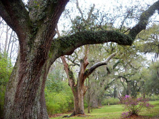 Spookhuizen bomen in de tuin