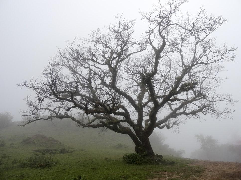 Spookhuizen enge boom