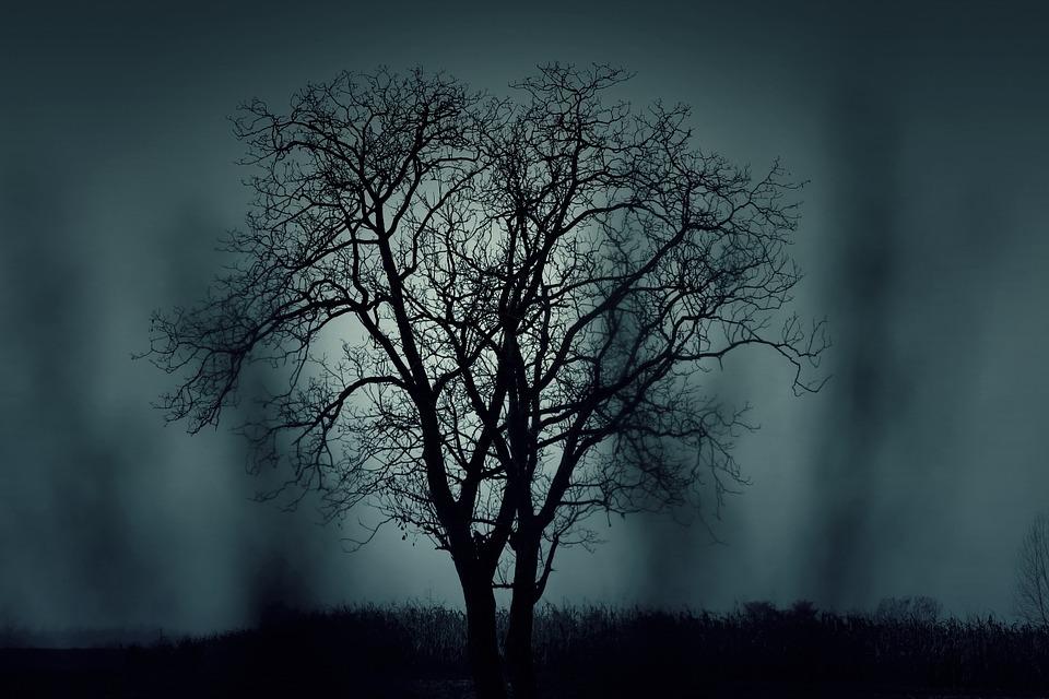 Spookhuizen nog engere boom