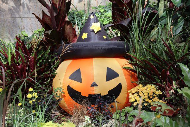Halloween snacks en decoraties
