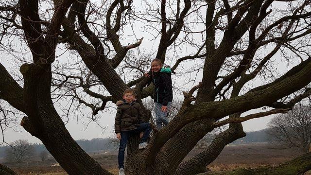 heide boom uitgelicht
